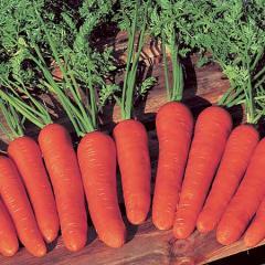 Semilla de Zanahoria Híbrido