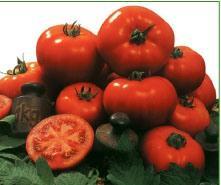 Semilla de Tomate variedad Amaral