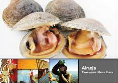 Almeja Tawera protothaca thaca