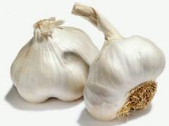 Ajos Allium Sativum