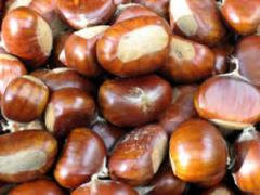 Fruits of Chinese chestnut