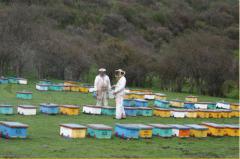 Evaluación de colmenas en terreno