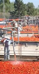 Derivados de tomate