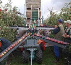 Fruit collectors