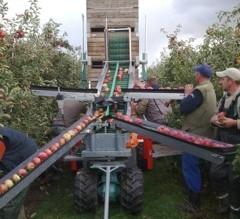 Cosechadora de manzana