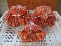 King Crab-Centolla