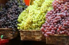 Grapes of table sorts