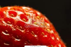 Seeds of strawberries