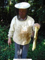 Ropa para apicultor con cabra