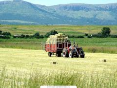 Aparatos de cultivar terrenos Mod 452