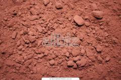 Theobroma cacao var. leiocarpum (Bernoulli) Cif