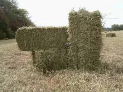 Alfalfa en fardos de 28 a 30 kilos
