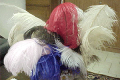 Plumas de Avestruces