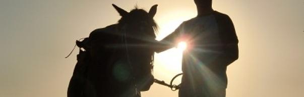 Pedido Tour Paseo a caballo en la cordillera Chilena