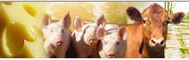 Agricultura. Ganaderia Intermediación de ganado y