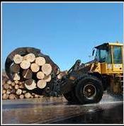 Servicios para Plantas Forestales