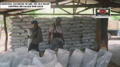 Exportación de carbón vegetal