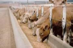 Producción y comercialización de de insumos para nutrición animal