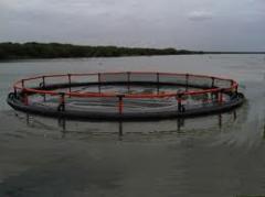 Producción de equipos para la piscicultura