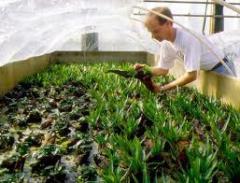 Propagación vegetativa de plantas