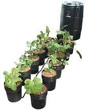 Micropropagación de plantas (In vitro)