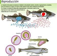 Reproduccion de Peces y Mariscos