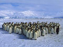 Expedicion Antartica