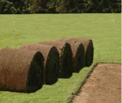 Cultivo de Pasto en Rollo