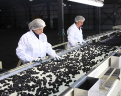 Prunes pitting process